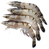 Frozen Thawed Tiger Prawns XL