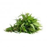 MALAYSIA Laksa Leaves +/-50g